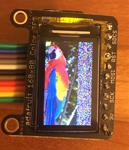 Click image for larger version.  Name:parrot-displayed.jpg Views:188 Size:43.2 KB ID:13858