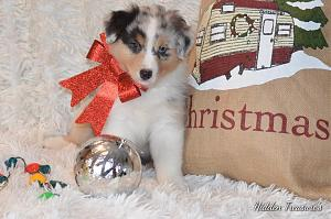 Click image for larger version.  Name:seven-week-christmas.jpg Views:72 Size:128.2 KB ID:15282