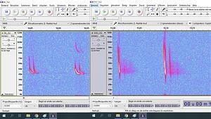 Click image for larger version.  Name:pipistrellismyotis.jpg Views:29 Size:156.4 KB ID:21394